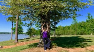 The Tree: A Professional Development Package