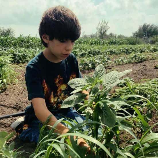 nephew picking weeds in garden in South Dakota